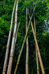Bambuswald Am Seven Sacred Pools Trail Auf Maui Hawaii Usa Buy