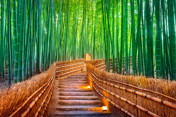 Wall Murals Bamboo Bamboo Forest in Kyoto, Japan.