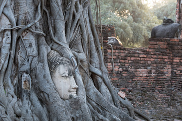 Head of sandstone buddha in the tree roots at wat mahathat temple, Ayutthaya Historical Park, Thailand