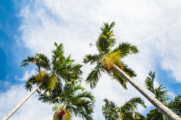 Top of coconut trees under blue sky