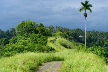 Campuan-Ridge-Walk