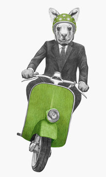 Kangaroo rides scooter, hand-drawn illustration