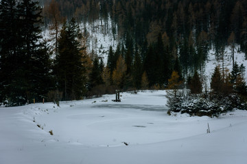 a frozen pond with a small island in the forest