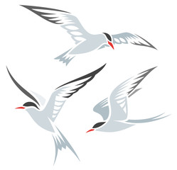 Stylized Birds - Terns