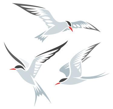 Stylized Birds - Terns