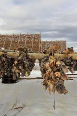 Wooden racks for drying skrei-codfish into stockfish. Laukvik-Vagan kommune-Austvagoya-Lofoten-Norway. 0643