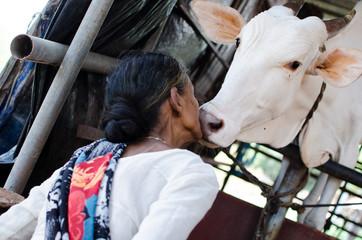 COW LOVINGLY KISSING A WOMAN