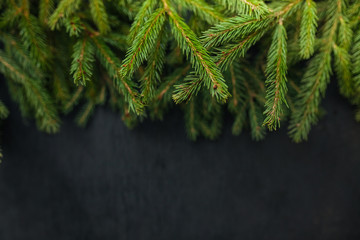 Fresh fir branch, isolated on a black background. View from the top. Christmas design wooden background