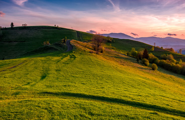 grassy pasture on hillside at sunset. beautiful springtime countryside in mountainous rural area