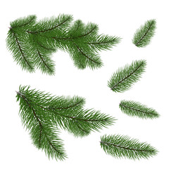 Set: fir branches. Fir tree branches for decoration. Drawing. Isolated on white background without shadow. close-up.