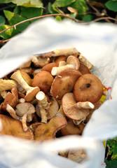 mushrooms in a bag