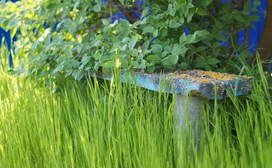 Old wooden bench in the grass