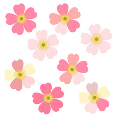 Romantic floral background. Flower. Japanese daisies