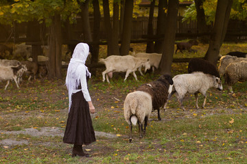 Young woman stroking sheep on a green glade