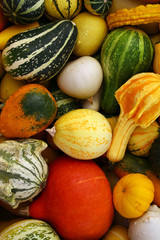 Colorful Pumpkin & Zucchini Varieties A