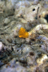 underwater world -yellow  christmas tree worm