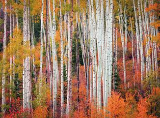 Wall Mural - Wasatch autumn scene, Utah.