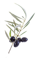 Close uo on black olive with his leaf and shadow on white backgeound