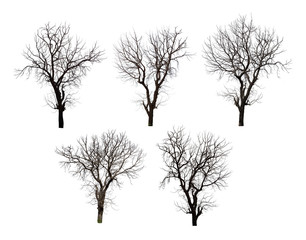 Collection of dead tree isolated on white background high resolution for graphic decoration, suitable for both web and print media