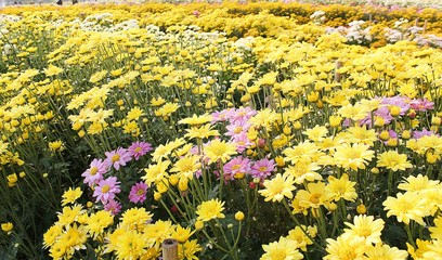 Yellow flowering flowers and pink flowers fill the area in spring.