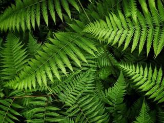 Plants leaf green nature