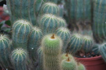 Prickly cactus, see the beautiful defense