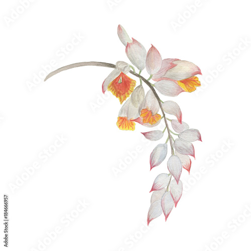 Watercolor Painting White Ginger Flowers Stock Photo And Royalty