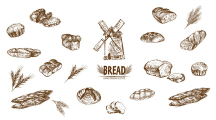 Digital vector detailed line art baked bread
