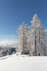 Fototapete - Winter scenery with a lot of fresh snow