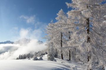Fototapete - Winterlandschaft mit Schnee und Bergen
