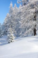 Fototapete - Winter landscape. Austrian Alps