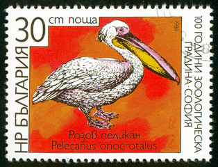 UKRAINE - circa 2017: A postage stamp printed in Bulgaria shows Rosy Pelican, Pelecanus onocrotalus, Series Zoological Garden of Sofia, circa 1988