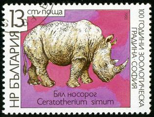 UKRAINE - circa 2017: A postage stamp printed in Bulgaria shows White Rhinoceros, Ceratotherium simum, Series Zoological Garden of Sofia, circa 1988