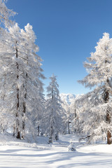 Fototapete - Snowy forest. Beautiful winter landscape
