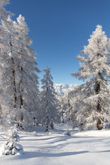 Fototapete - Beautiful white winter