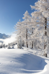 Fototapete - Winter wonderland in Austrian Alps
