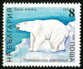 UKRAINE - circa 2017: A postage stamp printed in Bulgaria shows Polar Bear, Ursus maritimus, Series Bears, circa 1988