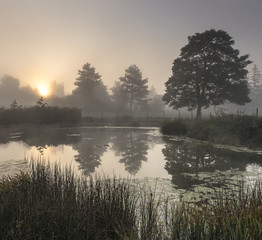 The misty pond early in the morning with the silhouettes of trees