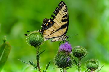 Butterfly on a Flower in a Field