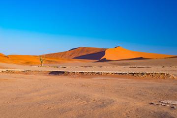 Sand dunes in the Namib desert at dawn, roadtrip in the wonderful Namib Naukluft National Park, travel destination in Namibia, Africa.