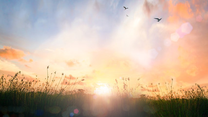 Tuinposter Ochtendgloren World environment day concept: Beautiful meadow and sky autumn sunrise background