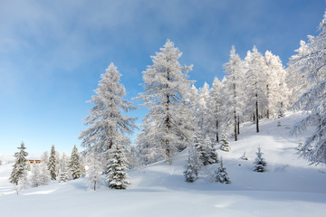 Fototapete - Winter scene. Frozen forest in the mountains