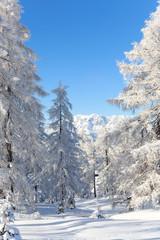 Wall Mural - Alpenlandscaft im Schnee