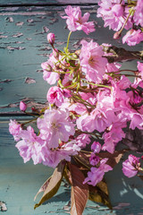 Beautifufl, vintage Spring background with flowers of Japanese cherry