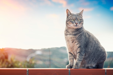 Female tabby cat portrait at sunset