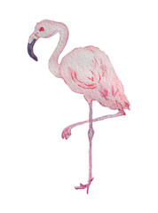 watercolor flamingo bird clipart