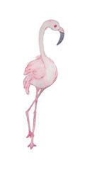 watercolor flamingo bird clipart