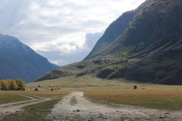 Autumn in Altai Mountains