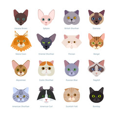 Cats faces collection. Vector illustration of different cats breeds, including havana brown, sphynx, British Shorthair, Siamese, Maine Coon, Oriental, Persian, Bengal, Abyssinian, isolated on white.