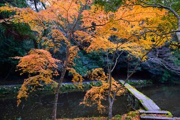 宇佐神宮の紅葉